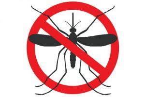 როგორ ვებრძოლოთ კოღოებს ხალხური და ეფექტური მეთოდებით