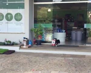 ძაღლი ყოველდღე თავად დადის საყიდლებზე