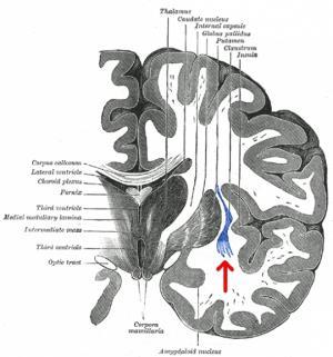 მეცნიერებმა აღმოაჩინეს ცნობიერების წყარო ადამიანის ტვინში
