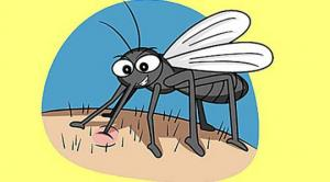 გაიგეთ რატომ გკბენთ კოღო ხშირად