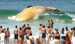 ოკეანეებში მომხდარი 5 ყველაზე უცნაური მოვლენა!