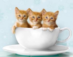 კატები – ყველაზე საოცარი არსებები დედამიწაზე   (+  გულისამაჩუყებელი  ფოტოები)