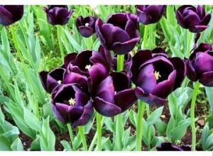 ყველაზე ძვირადღირებული ყვავილები
