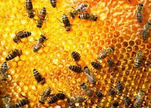 ფუტკრების პოპულაციის შემცირება და რა ზიანი შეიძლება მოგვიტანოს მან?