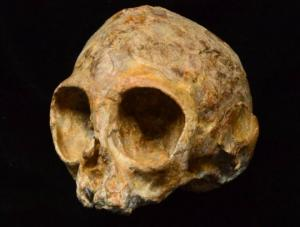 ადამიანების და სხვა პრიმატების 13 მილიონი წლის წინანდელი ბოლო საერთო წინაპარი