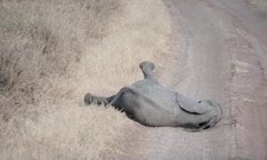 უნიკალური კადრები, სპილოებმაც კი იციან შვილის სწორად აღზრდის მეთოდები ანუ თავნება შვილის სრული იგნორი