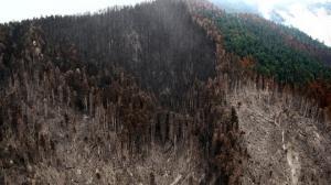 გადამწვარი ბორჯომის ტყის სულისშემძვრელი ფოტოები