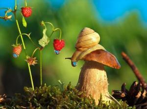 მიკროსამყარო-ბუნების დაუჯერებლად ლამაზი ფოტოები