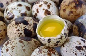 რატომ უნდა მივირთვათ მწყრის კვერცხი? უნიკალური პროდუქტი უამრავი დაავადების წინააღმდეგ
