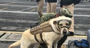 ამ მექსიკელმა ძაღლმა  52 ადამიანის სისოცხლე გადაარჩინა!