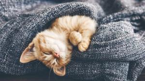 ძილის წინ შესრულებული ეს 6 ქმედება მნიშვნელოვნად გააუმჯობესებს თქვენი ძილის ხარისხს