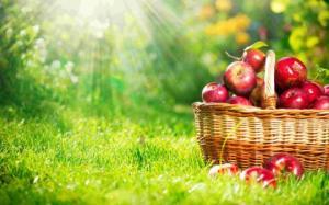 «სულის ჭურჭელი» და სათლი ვაშლი (იგავი)