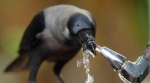 ექსპერიმენტები ცხოველებისა და ფრინველების ინტელექტის დასადგენად