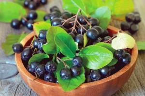 უნიკალური მცენარე წონაში კლების, გულ-სისხლძარღვთა დაავადებებისა და საშარდე გზების ინფექციების წინააღმდეგ
