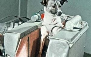 ძაღლი ლაიკა-ბილეთი ერთი მიმართულებით  ანუ 60 წელი კოსმოსში მოგზაურობიდან