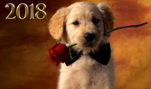 2018 ყვითელი ძაღლის წელი - რას ჰპირდება ეს წელი ზოდიაქოს სხვადასხვა ნიშნებს