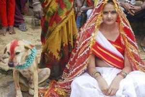 უცნაური ინდური ტრადიცია: გოგონა გაყვა ცოლად მაწანწალა ძაღლს