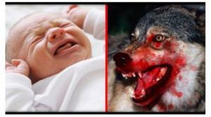 აშშ-ში მედდა ჩვილი ბავშვებით მგლების გამოკვებას გეგმავდა, რის გამოც კლინიკიდან გააგდეს