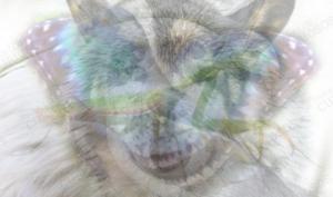 რომელი ცხოველი დაინახეთ? ტესტი, თქვენი ხასიათის შესახებ