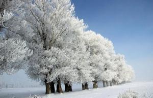 ტემპერატურა  -17 ° - მდე დაეცა, ამასობაში ბუნების სილამაზემ თავი იჩინა!
