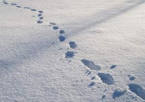 """ორი მოკლული, თოვლზე დატოვებული კვალი და """"ლეტნიკის"""" ტყის საიდუმლო"""