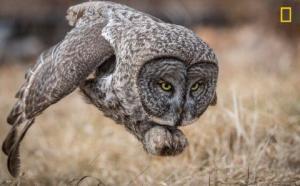 National Geographic - მა 2017 წლის 20 საუკეთესო ფოტო გამოაქვეყნა