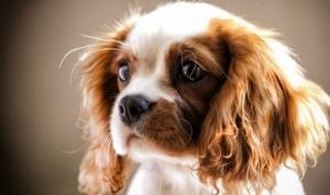 100 წლის თავსატეხი-მოძებნე სურათზე ძაღლის პატრონი