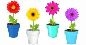 ტესტი: ამოირჩიეთ ყვავილი და გაიგეთ რას ამბობენ თქვენზე ფსიქოლოგები