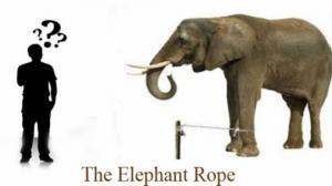 სპილოები ბაწრით! -მორალი:-''არასოდეს დანებდე,ცდას ყოველთვის აქვს აზრი!''
