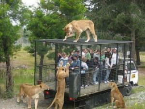 გიყვართ ცხოველები?  იქნებ ცოტა ხნით თავი შეიკავოთ ზოოპარკში სტუმრობისგან