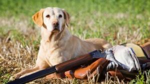 რუსეთში ძაღლმა სანადირო თოფით მონადირე მოკლა