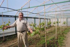 ვენახი სათბურში - იმერელი ფერმერის ინოვაციური ბიზნესწამოწყება