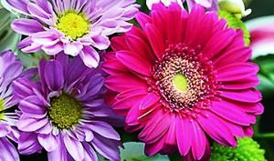 ნიშადურის სპირტი – სასუქი და დაცვა ოთახის მცენარეებისთვის