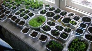 ბუნებრივი სასუქი, რომელიც ნიადაგს ჟანგბადით ამდიდრებს და მცენარის ფესვებს  აძლიერებს
