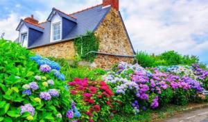იყო თეთრი, გახდა… როგორ შევუცვალოთ ფერი ყვავილებს? (ბაღში და სახლის პირობებში)