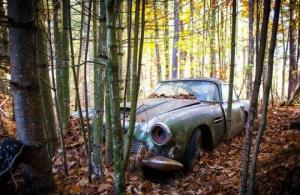 ტყეში  250 000 დოლარად შეფასებული მანქანა აღმოაჩინეს