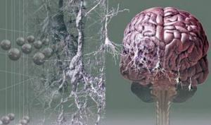 მეცნიერებმა 5 მიზეზი დაასახელეს, რის გამოც ტვინის უჯრედები კვდება