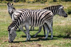 9 ფაქტი ცხოველების შესახებ, რომელიც ბიოლოგიის გაკვეთილებზე არ გვისწავლია