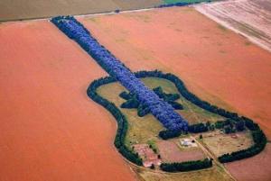გიტარის ფორმის ტყე და მასთან დაკავშირებული სიყვარულის სევდიანი ისტორია