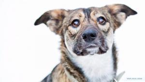 """""""მოგიყვეთ საოცრება ერთგულებაზე, სიყვარულზე, თავგანწირვაზე?"""" - N54-ე ავტობუსის მძღოლისა და ძაღლის ამაღელვებელი ისტორია (ვიდეო)"""
