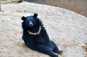 """ჩინეთში მამაკაცი """"ლეკვს""""  ზრდიდა და დათვი გამოდგა"""