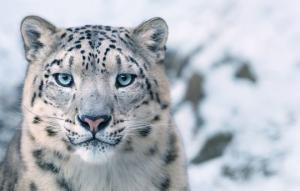 ფოტოგრაფმა 2 წელი გაატარა გადაშენების პირას მყოფი ცხოველებისთვის სურათების გადაღებაში