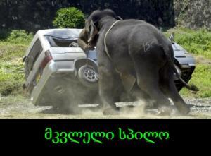 მკვლელი სპილო