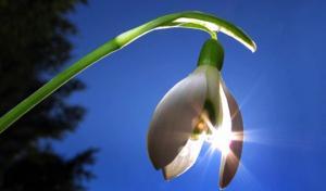 20 მარტი  –  სურვილების  ჩაფიქრების  დღეა
