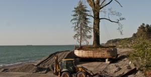"""ბაბუხადია: """"ხეების ტრანსპორტირებისას  იჭრება სხვა ათობით საღი ხე, ეს კი თავისთავად დიდ ზიანს აყენებს გარემოს"""""""