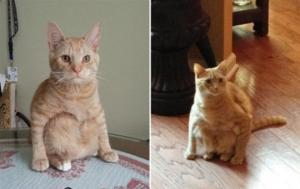 კატები, რომლებიც გადაეჩვივნენ კატასავით ჯდომას ადამიანებივით არიან ჩაცუცქული და ჩამომჯდარი