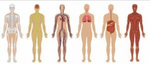 5 სასარგებლო ნივთიერება,რომელიც ყველაზე ხშირად აკლია ჩვენს ორგანიზმს