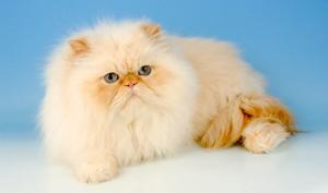 10 რამ, რაც კატებს არ მოსწონთ
