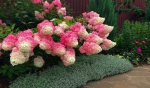 10 ყველაზე ლამაზი ბუჩქოვანი მცენარე
