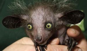 უცნაური ცხოველები, რომელთა არსებობის შესახებაც არაფერი ვიცით